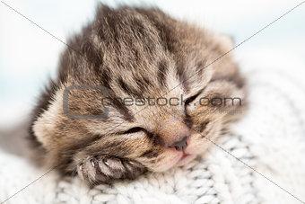 Sleeping baby kitten