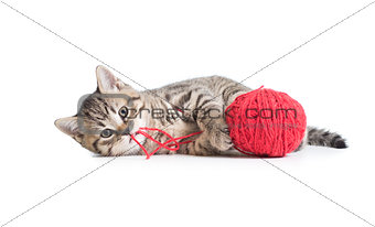 kitten playing red clew isolated on white