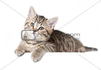 Cat or kitten isolated lying