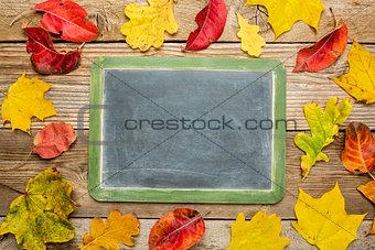 blank slate blackboard  with leaves