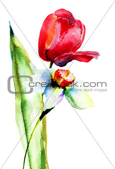 Watercolor illustration of Tulips and Narcissus flowers
