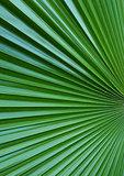 Texture_leaf