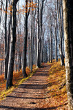 Autumn (fall) forest