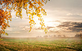 Morning in the autumn field