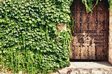 Wooden door and ivy
