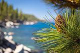 Beautiful Pine Cone on Tree Near Lake Shore
