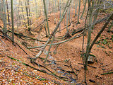 deciduous forest with ravines