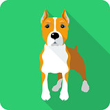 dog Amstaff icon flat design