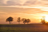 Trees at sunset with walker, Pfalz, Germany