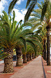 Walking alley with palms in Barcelona at Barceloneta beach