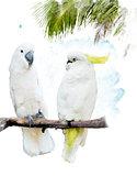 White Parrots