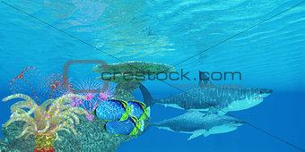 Great White Shark Reef