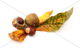 Autumn leaves with conkers and seed cases