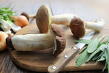 Mushroom boletus on cutting board