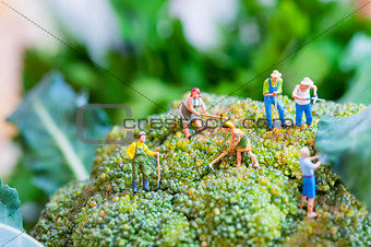 Group of farmers on a giant cauliflower