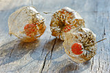 Physalis alkekengi on wood