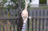 Ginger cat walking on a wooden fence