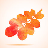 Orange watercolor dog-rose leaf