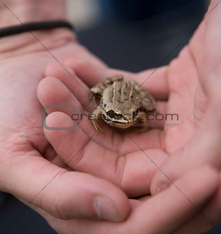 Trapped Frog