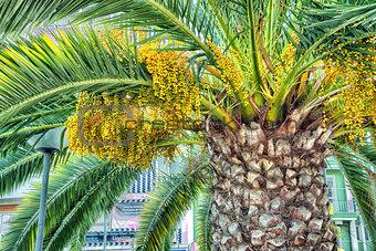 Beautiful lush palm