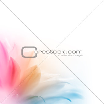Bright Multicolored Cactus Flower on the White Background