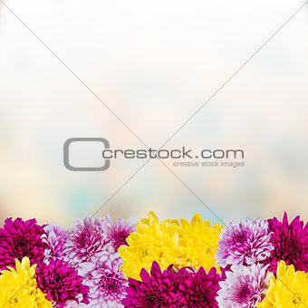 Background with chrysanthemum