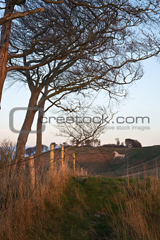 Ancient chalk white horse in landscape at Cherhill Wiltshire England