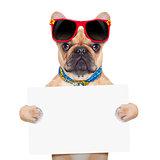 banner placard dog