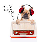 dog   relax music
