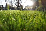Green Grass Shining in the Sun