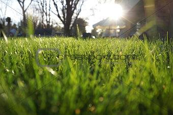 Green Grass Shining in the Sun
