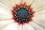 daisy macro with grungy overlay