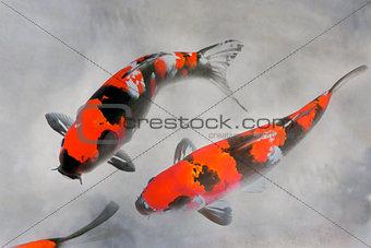 Calico Koi Fish Watercolor Illustration