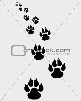 footprints of dogs 3