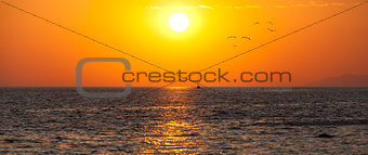 Amazin dawn background with ship and seaguls