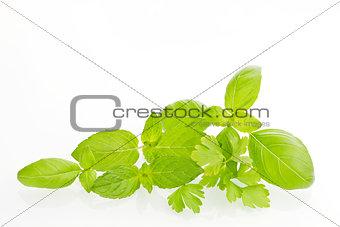 Culinary organic natural herbs.