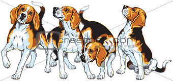 four beagles