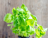 Fresh basil on the wooden background