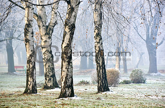 forest in fog during Winter Autumn Fall