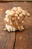 fresh wild mushrooms