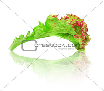 green with red edging lettuce with reflection on isolated white
