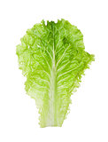 lettuce salad on white background