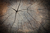 Texture of wood stump