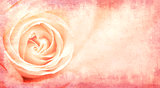 Banner with pink rose