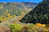 Autumn scenery of trees at Jiuzhaigou