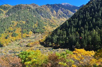 Autumn scenery of trees at Jiuzhaigou