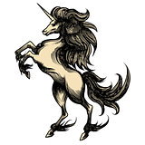 Heraldry unicorn drawn in engraving style