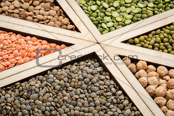 bean, lentil and pea abstract