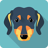 dog dachshund icon flat design