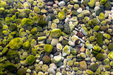 Stones Under Water with Moss